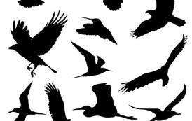 גרפיקה וקטורית להורדה- ציפורים