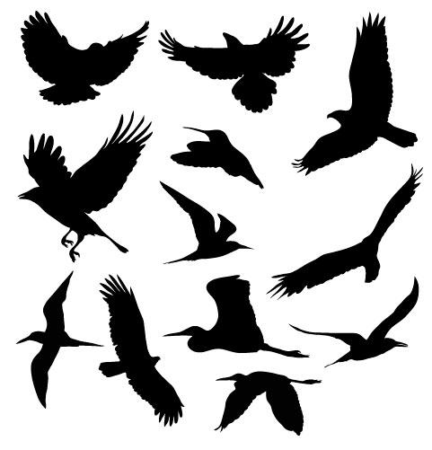 עיצובי וקטור של ציפורים מעופפים